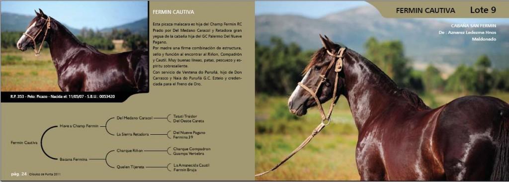 Caballos Criollos San Fermin Fermin Cautiva en Crioulos de Punta